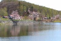 聖台ダムの桜VOL.3~令和元年5月 - My favorite ~Diary 3~