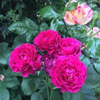 ラプソディ・イン・ブルー - Pikki58's Blog