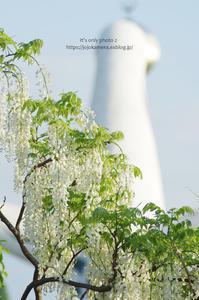 万博公園の藤 - It's only photo 2