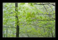 霧の新緑 - Desire