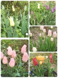 庭の様子と、インスタでは鳥の鳴き声とネズミちょろちょろ(◎_◎;) - ちゃたろうとゆきまま日記