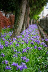 初夏の花巡り・一初@上御霊神社 - デジタルな鍛冶屋の写真歩記