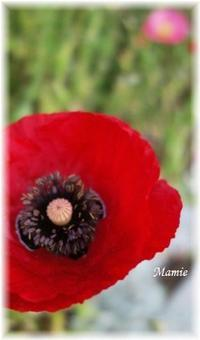 今朝の公園の花たち・・・ - おだやかに たのしく Que Sera Sera