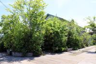 林のカフェ/植栽/外構/倉敷市林 - 建築事務所は日々考える
