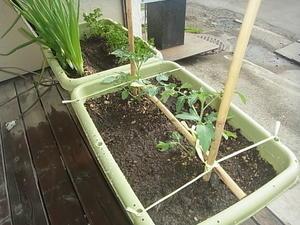 プチ菜園 -