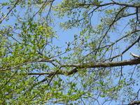 【もうすぐ超宴!】今週末の天気と気温(2019年5月16日) - 北軽井沢スウィートグラス