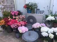 山鹿 ディフェランスさんでの母の日イベント -  お花とハーブのアトリエ muguette