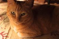 「座る猫ところがる猫」 - もるとゆらじお