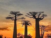 しびれを切らして、マダガスカルへ行きます! - せっかく行く海外旅行のために