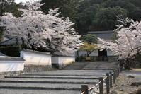 南禅寺の桜 - ぴんぼけふぉとぶろぐ2