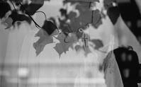 first summer Leica - Shuffle
