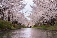 圧倒的桜。平成FINAL - Photo Terrace