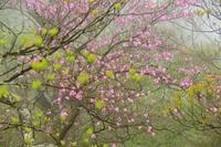 花の回廊を歩く大黒尾根 - 峰さんの山あるき