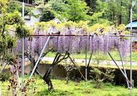 藤の花 - 自然の中でⅡ