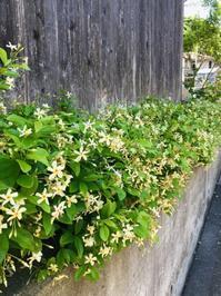 鎌倉心景「佐助」 - 海の古書店