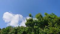 気持ちのよいスタート - 三宅島風景