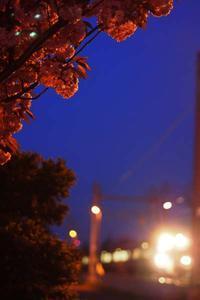 5月16日今日の写真 - ainosatoブログ02