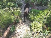 庭の主 - natural garden~ shueの庭いじりと日々の覚書き
