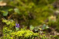 小さな花♪ - Lovely Poodle