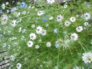 花のある暮らし -