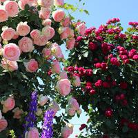 導かれる。薔薇のトンネルをくぐる度に羽根がはえてくる - poem  art. ***ココロの景色***