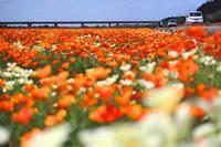 花見に - FUTU no PHOTO