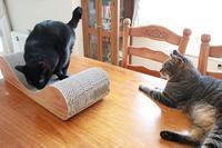 久しぶりのダンボール爪とぎは好評 - きょうだい猫と仲良し暮らし