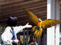 フリーフライト - 動物園放浪記
