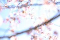 2019さくら週間最終美~旭川空港~ - 自由な空と雲と気まぐれと ~from 旭川空港~