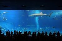 【沖縄美ら海水族館】沖縄旅行 - 6 - - うろ子とカメラ。