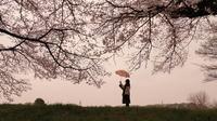 ✿圧倒的桜。平成FINAL - ✿happiness✿