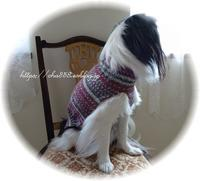 綴じはぎなしネックから編む犬セーター - 狆の茶々丸
