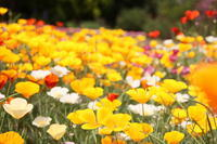 ローズ・フェスタ2019 - 四季の色 -Colors of the Four Seasons