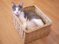 猫のお預かり 赤福くん編。 - ゆきねこ猫家族
