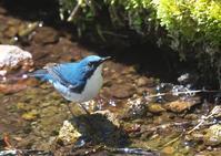 軽井沢野鳥の森 - くまさんの二人で鳥撮り