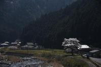 里山の桜 - (=^・^=)の部屋 写真館