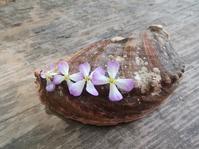 浜の花摘み… - 侘助つれづれ