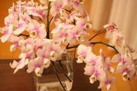 花を飾る - 暮らしのおともに
