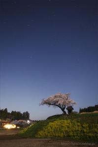 小沢の桜 - 遥かなる月光の旅