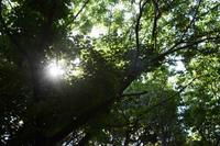 森も素敵です - 三宅島風景