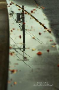 雨上がりのお散歩 - It's only photo 2