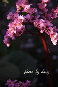 春の庭 - ロマンティックフォト北海道☆カヌードデバーチョ
