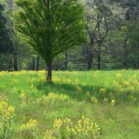 高原は新緑がいっぱい - 好日晴天.ほんじつはせいてん