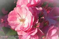 「芝公園の薔薇花壇」 - こころ絵日記 Vol.2