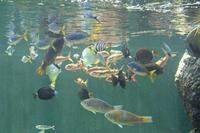 葛西臨海水族園:「小笠原の海4」①~ナメモンガラの秘密の背びれ - 続々・動物園ありマス。