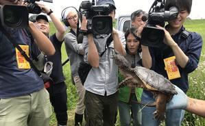 19.05.17(金) 千葉県カミツキガメ捕獲事業 - たきた敏幸日記