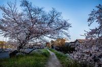 sakura memories ~special spring~ part 2 - 気の向くままに…