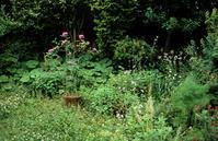 雑草の季節 - そぞろ歩きの記憶