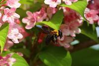 蜂が飛ぶ - はっぴいでいず