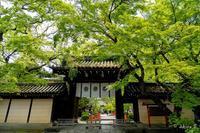 🍀 新緑 2019 -4- 今宮神社 🍀 - ◆Akira's Candid Photography
